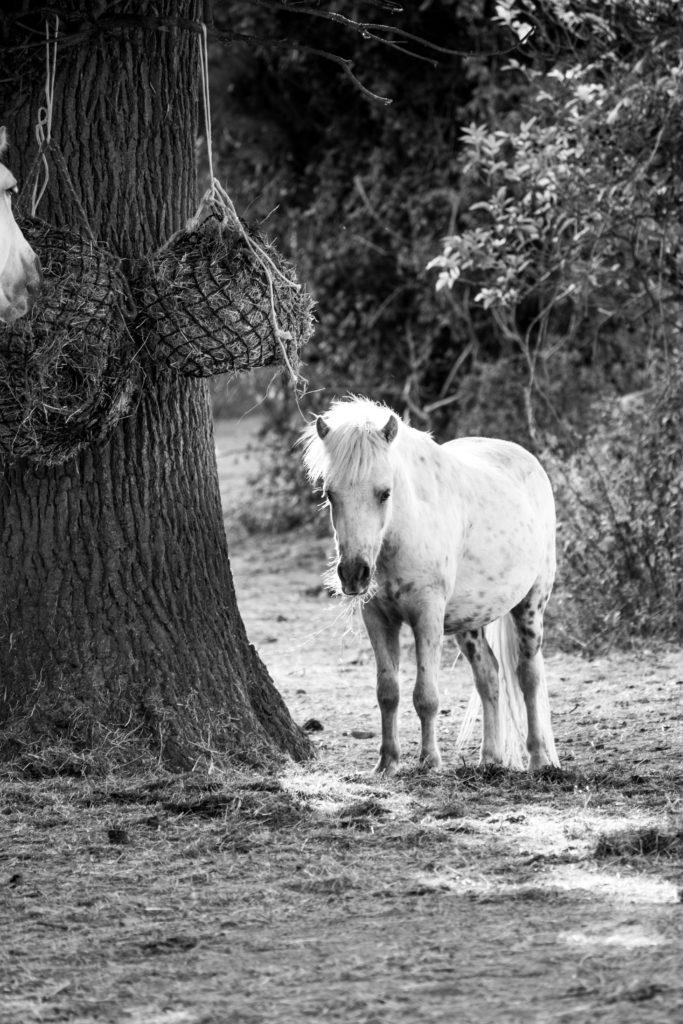 Athena Equestrian
