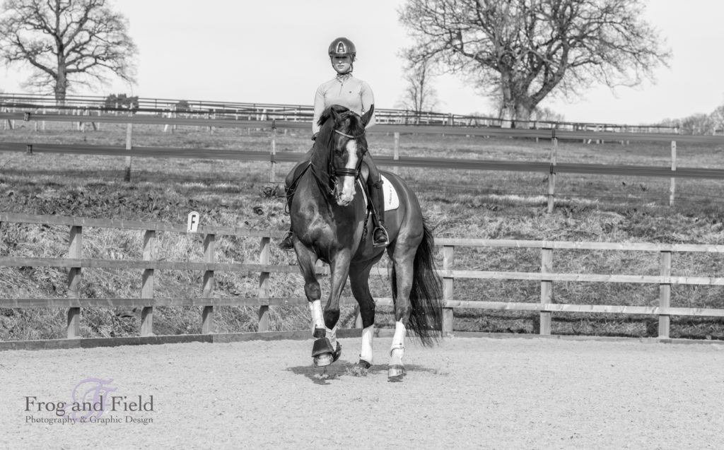 Amy Stovold Kent Equine Photographer