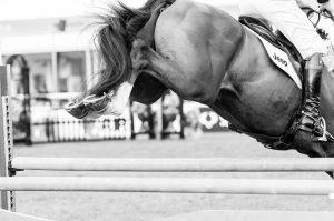 Equine Photographer Kent