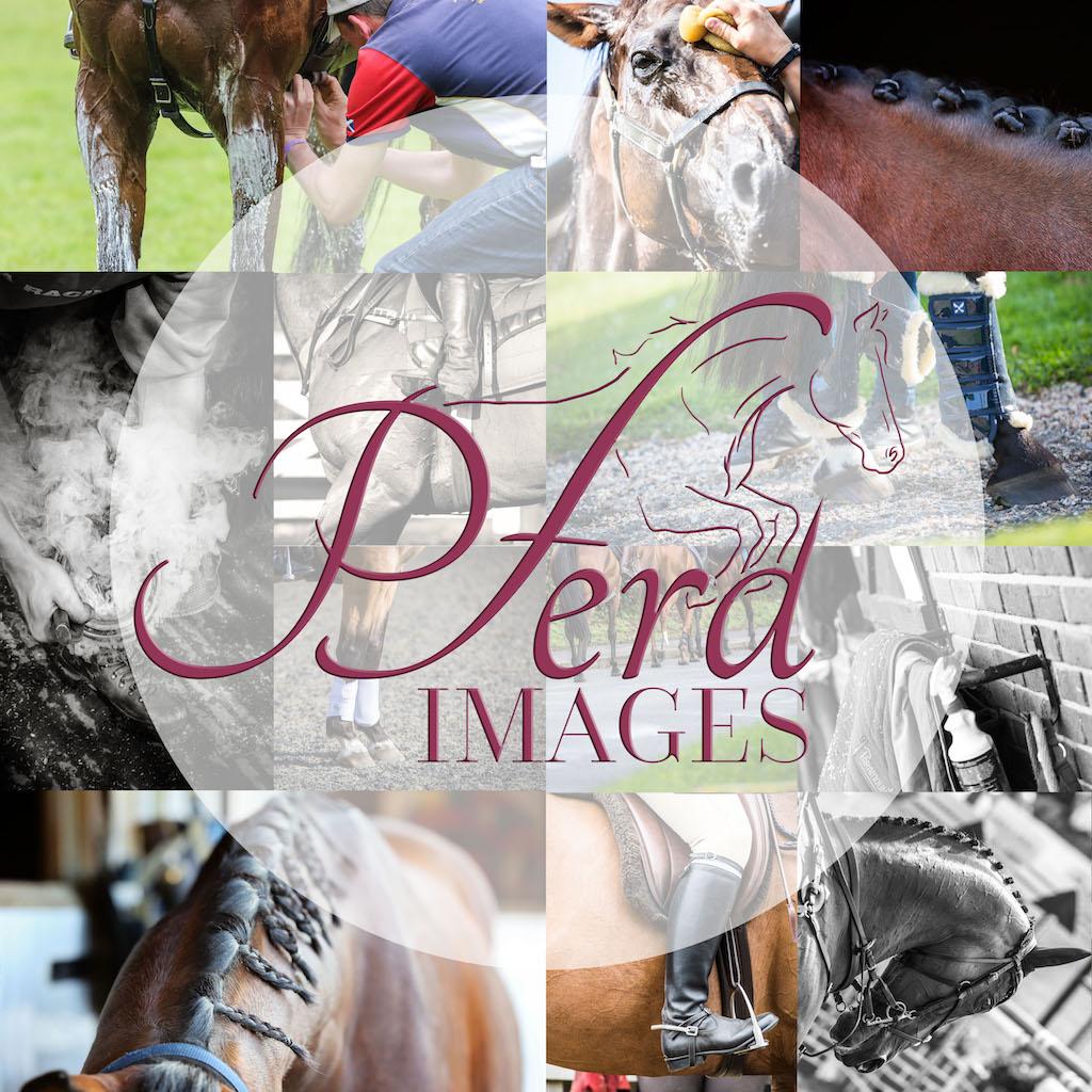 Pferd Images