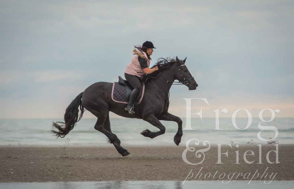 Equine Photoshoot