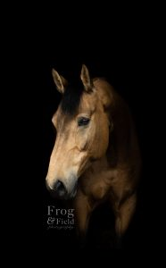An Equine Portrait Session in Kent