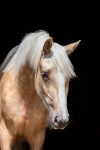Equine Sales Shoot in Kent