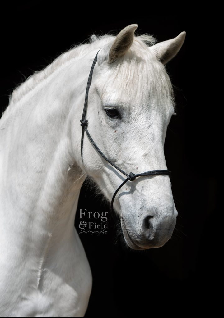 Kashmir and Rupert: An Equine Sales Shoot in Kent by Frog and Field.