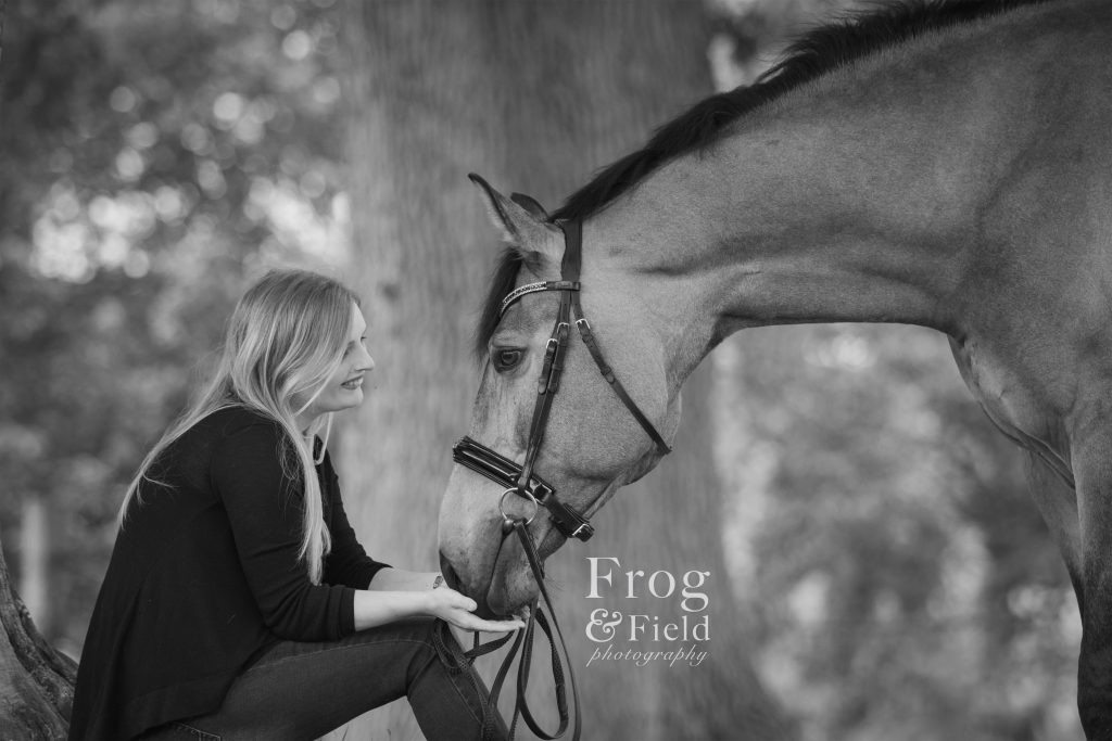 An Equine Portrait session