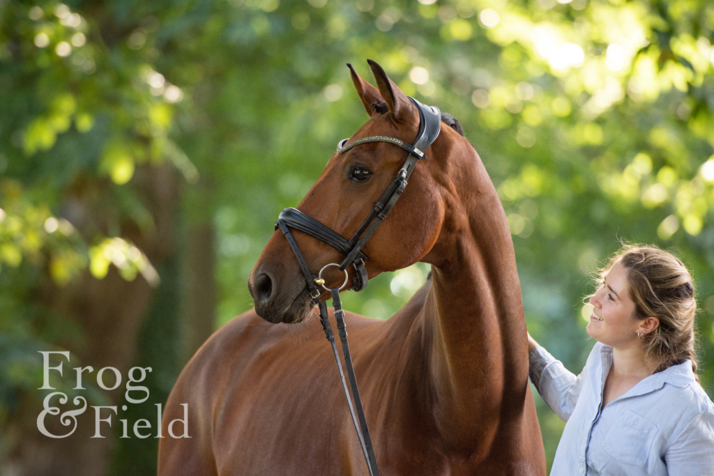 Fiasco, Solo and Bertie: An Equine Portrait Session in Kent
