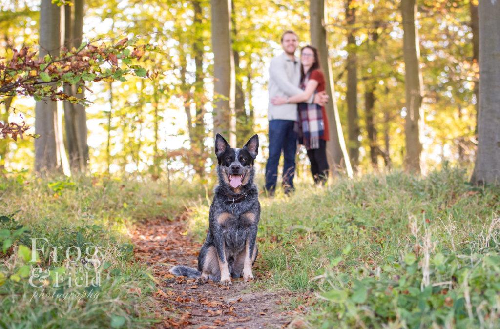 Canine Portrait