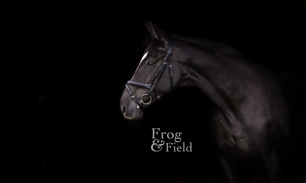 Your Equine Photoshoot