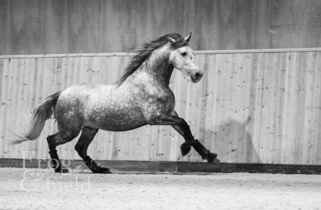 Suzie and Eupho PRE Horse