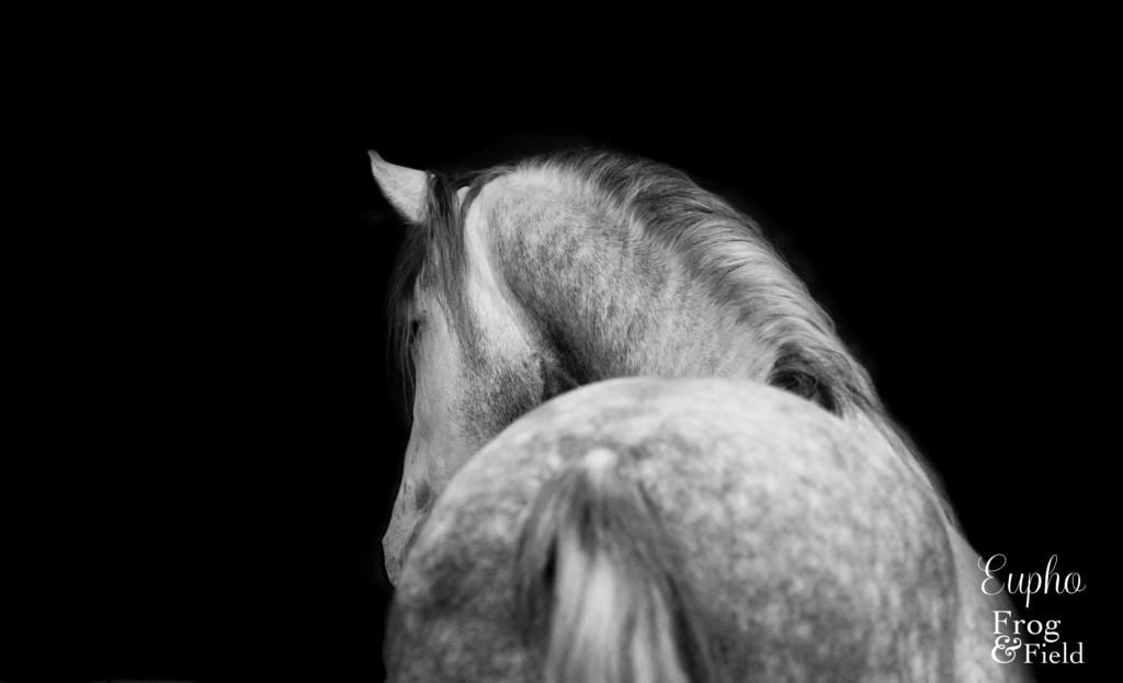 Suzie and Eupho Equine Photo in Sussex